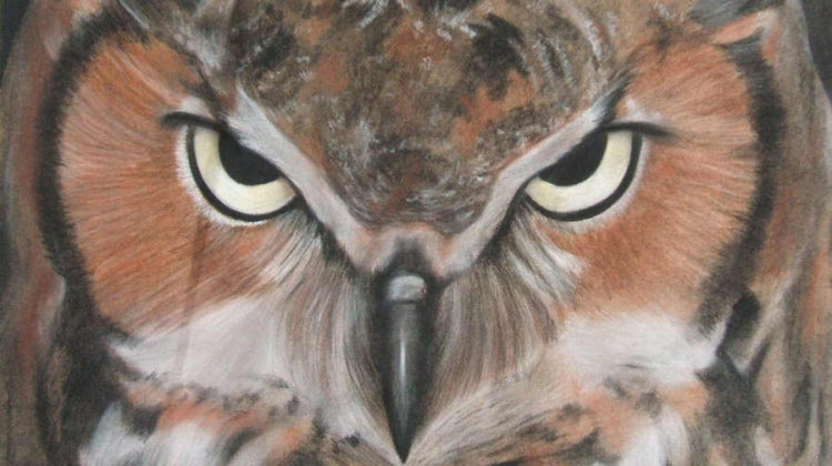 Cos'è il Google Project Owl e come Influenzerà Serp e Featured Snippet