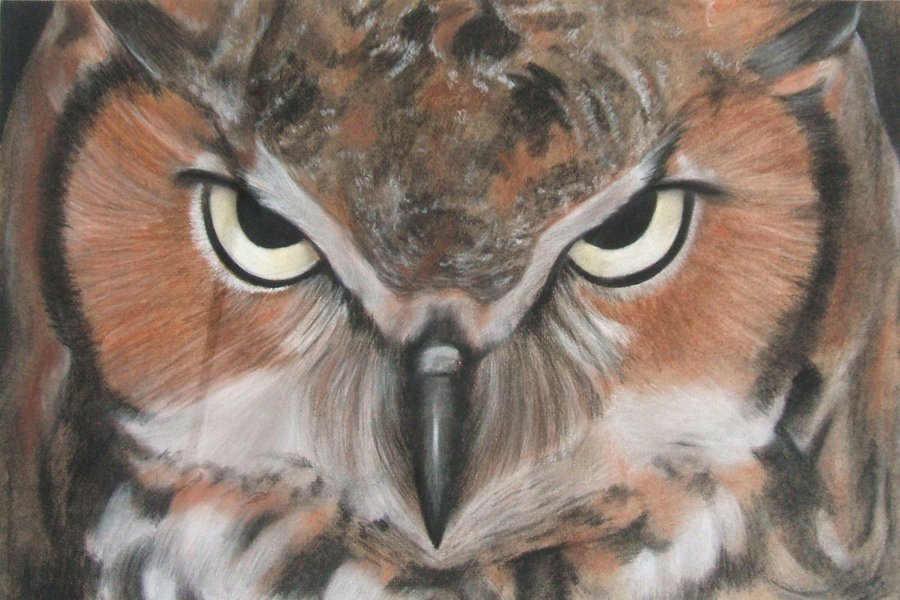 Google Project Owl: che cos'è